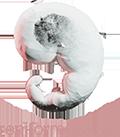 Logo Reniform